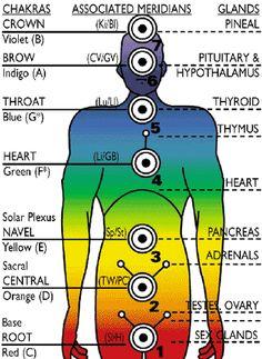 chakras- meridians-glands associations