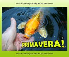 FELIZ PRIMAVERA!! http://acuariosyestanquesacuatica.com #primavera