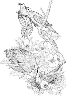 Click To See Printable Version Of Mourning Doves Coloring Page
