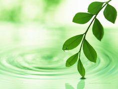 Çabuk Zayıflatan Bitkiler