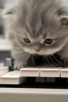 This kitten is definitely going to grow up to be a rock star! #kitten #piano #cute