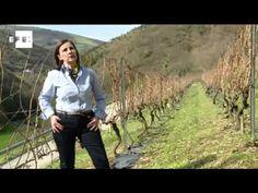 Un proyecto del CSIC recupera la viticultura heroica en Asturias