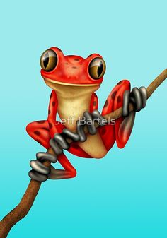Cute Red Tree Frog on a Branch | Jeff Bartels