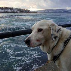 En hund etter naturopplevelser!