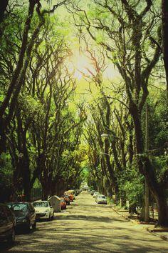 A rua mais bonita do mundo - Brasil (por Ariane Hauck )
