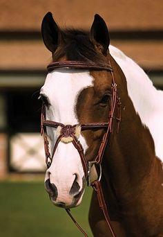 ♥ ♥ ♥Beautiful Horses ♥ ♥ ♥