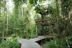 Abai Jungle Lodge Bird Tower, Borneo