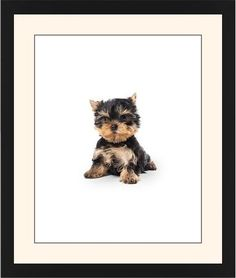 Terrier Puppy Framed Print, Black, Contemporary, Black, Cream, Single piece, 16 x 20 inches