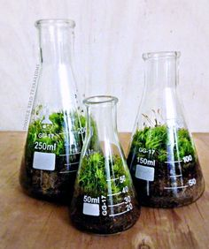 This unique chemistry terrarium set is the perfect accent to industrial chic decor. Made from 3 glass Erlenmeyer flasks planted with freshly collected Dicranum Mood Moss, an easy to care for plant perfectly suited for terrarium life. The tapered shape of the lab flasks keep moisture inside and reduces the need for frequent watering...easy care! Makes the perfect gift for that special man or woman in your life. Gift card/note is free upon request.  Features: • 3 Sizes - 50, 150 and 250ml (4 H,...