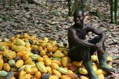 Annual Divine Poetry Contest - This year's theme invites you to think about how much you enjoy eating chocolate and then imagine what it might be like to meet a cocoa farmer from Ghana. Entries are due 30 April Poetry Competitions, Poetry Contests, Global Food Security, Divine Chocolate, Chocolate World, Cacao Beans, Theobroma Cacao, Ranch Life, Ghana