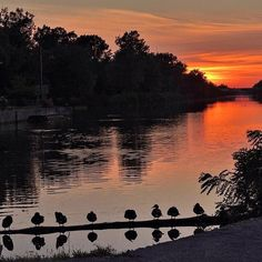 Ducks in a row on the Erie Canal, Rochester, New York. shared by @mctmama #ThisIsROC