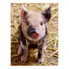 Shop Cute Baby Piglet Farm Animals Barnyard Babies Cover For iPad Mini created by azlaird. Baby Farm Animals, Funny Animals, Cute Animals, Barnyard Animals, Animal Memes, Wild Animals, Fluffy Cows, Baby Piglets, Baby Canvas