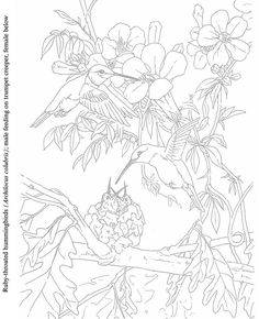 Birds To Paint Or Color Coloring Book Pages