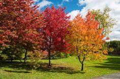 JSPuzzles - puzzles en línea - Autumn Landscape