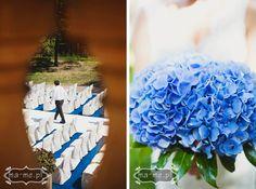 Niebieskie hortensje/ Blue hydrangea