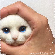 candy pop✳︎羊毛フェルト猫(@candypop_amr)さん   Twitter