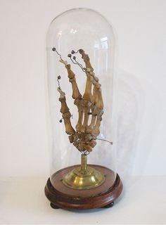 anatomical hand - late 19th c.