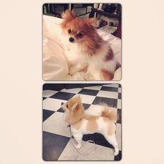 Foxy so fresh and so clean #groomer @a_la_matt - @allipags- #webstagram