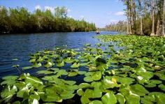 Okefenokee Swamp | Travel USA 10 Cool Places To Visit
