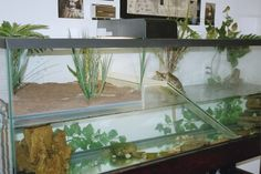 turtle tank with nesting box