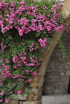 Pink climbling roses in Provence by Tame1954, via Flickr