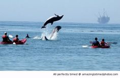Dolphins jump out just in time | Amazingly Timed Photos