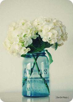 White Hydrangeas In vintage Blue Ball Mason Jars, great for vintage shabby chic wedding table decor