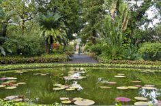 Stunning #botanical gardens in #Tenerife