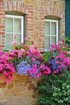 Flowers - Gorgeous pink & purple flowers in window boxes