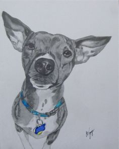 Our dog Barney drawn by Jim Joye of Spot on Dog Portraits!