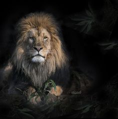 King by Robert Goulet on 500px