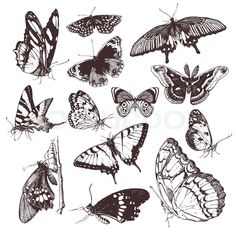 Vintage clip art illustrations of hand drawn butterfly isolated ...
