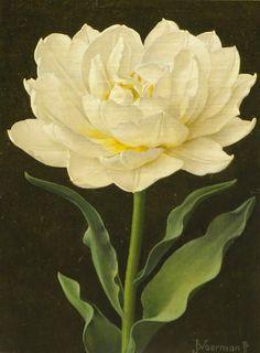 Jan Voerman Jr. White Tulip 20th century