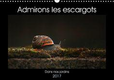 Admirons les escargots - CALVENDO