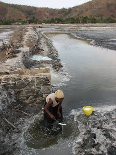 Salt harvest by hand at Aquaculture salt and fishponds at Tibar, and extensive mature mangrove patch (8-10 m tall)  Dili Timor-Leste