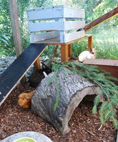 au enhaltung meerschweinchen pinterest kaninchen meerschweinchen und kaninchenstall. Black Bedroom Furniture Sets. Home Design Ideas
