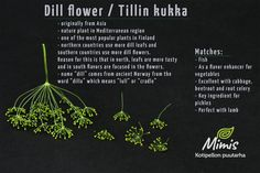 Dill Flower / Tillin kukka Nature Plants, Edible Flowers