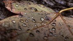 Ez egy olyan kép amely iskolából haza jövet készült egy őszi borongós délutánon