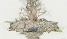 'Lathkill Dale Tree' 2014 drawing by Mark Langley of a Derbyshire tree and limestone rock. Colour pencil and pencil 72 x 42 cm www.mark-langley.com