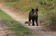 Nederlands 'wild life': Met mama aan de wandel - foto gemaakt in Gelderland, Nederland