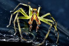 spider looking at me by airmanflames, via Flickr