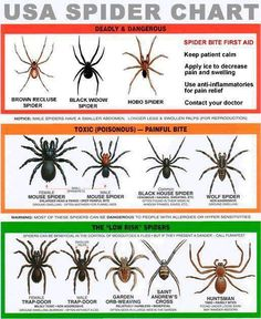 USA Spider Chart.  Know how to identify the dangerous from the harmless.  Click image to download the full size graphic.