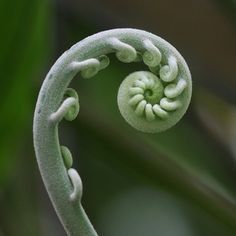 Image result for bouquet fern swirl