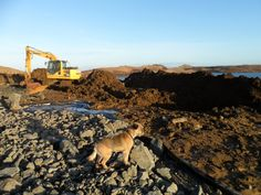 Rowan croft. Isle of Skye. Wilf the Border Terrier oversees operations on the new house build footings