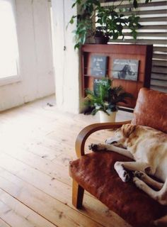 Pooch and furniture perfectly matched