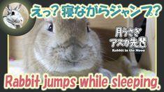 えっ? 寝ながらジャンプ?【ウサギのだいだい 】 2018年1月22日