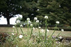 Spring Ahead: 10 Tips To Get Your Garden Ready: Gardenista