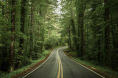 Choose Tennessee Forest Road Wall Mural to create a fantastic wall decor in your room or browse thousands of other wall murals and custom wall murals only at Eazywallz.com