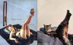 Cats That Look Like Pin Up Girls: Photo