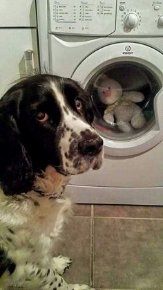 Mom ... my baby is in the dryer!!